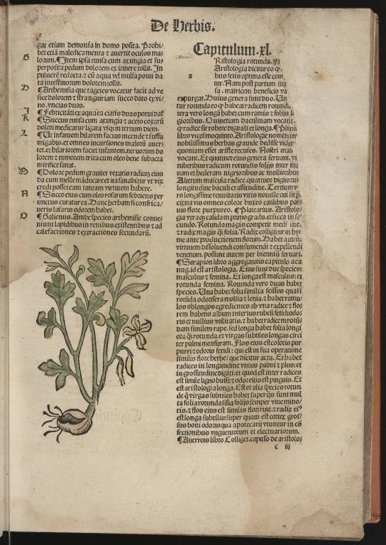 Hortus sanitatis, Fol.16 recto