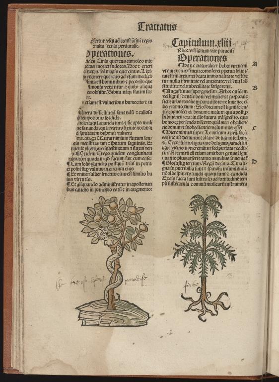 Hortus sanitatis, Fol.17 verso