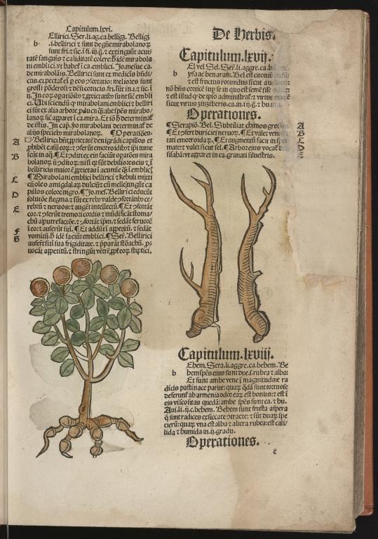 Hortus sanitatis, Fol.26 recto