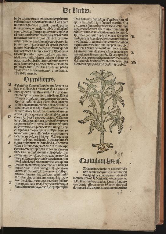 Hortus sanitatis, Fol.32 recto