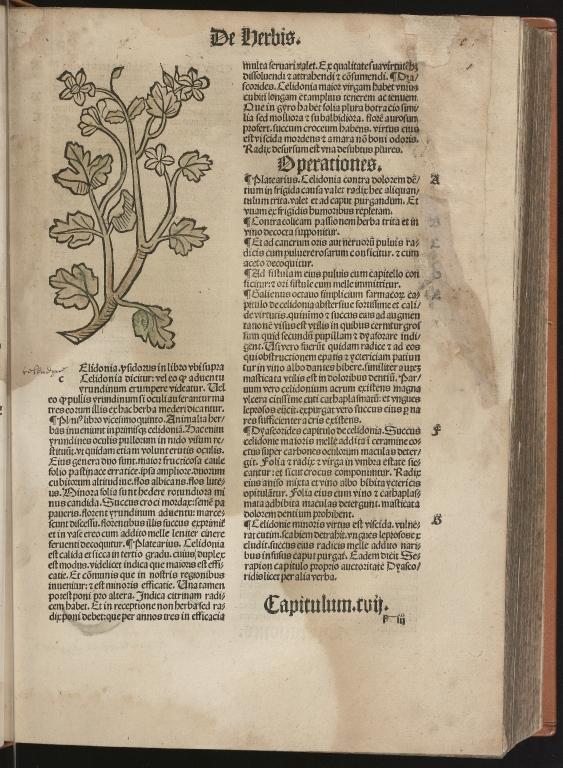 Hortus sanitatis, Fol.40 recto
