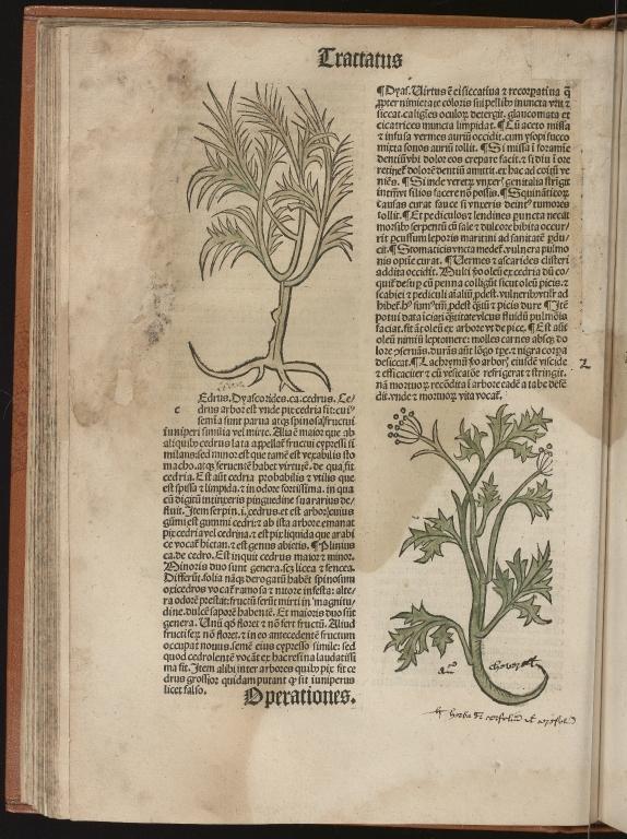 Hortus sanitatis, Fol.40 verso