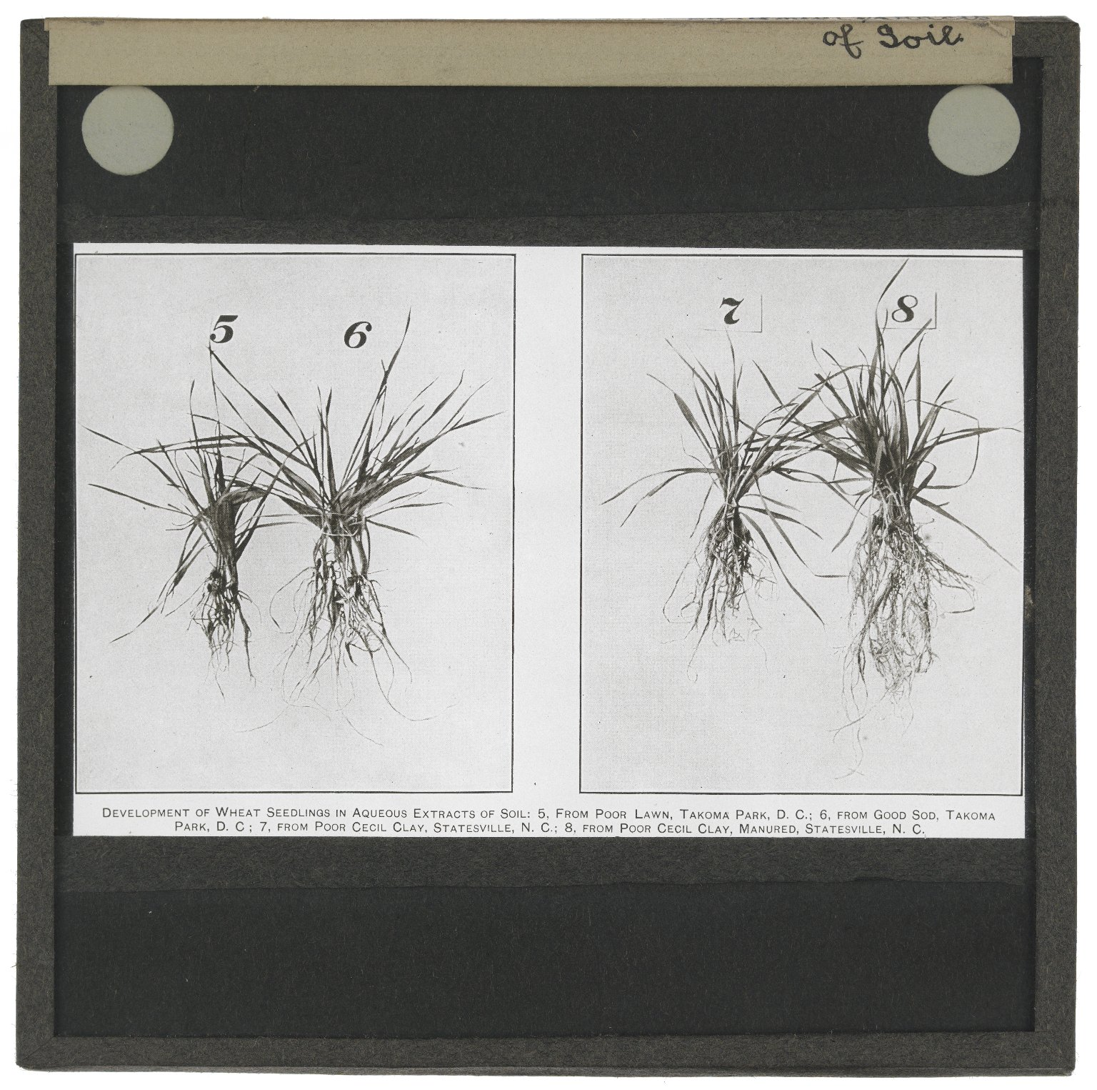 Roslin Glass Slides ,No. 1360