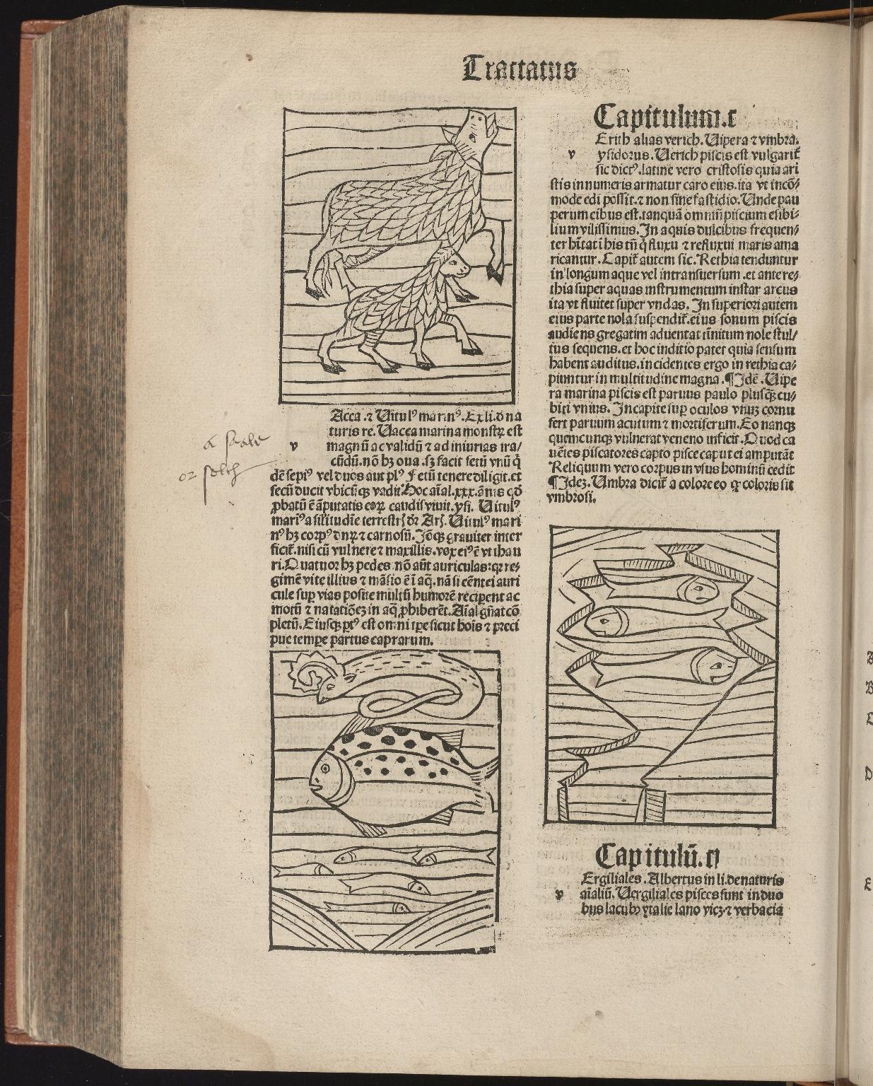 Hortus sanitatis, Fol.295 verso