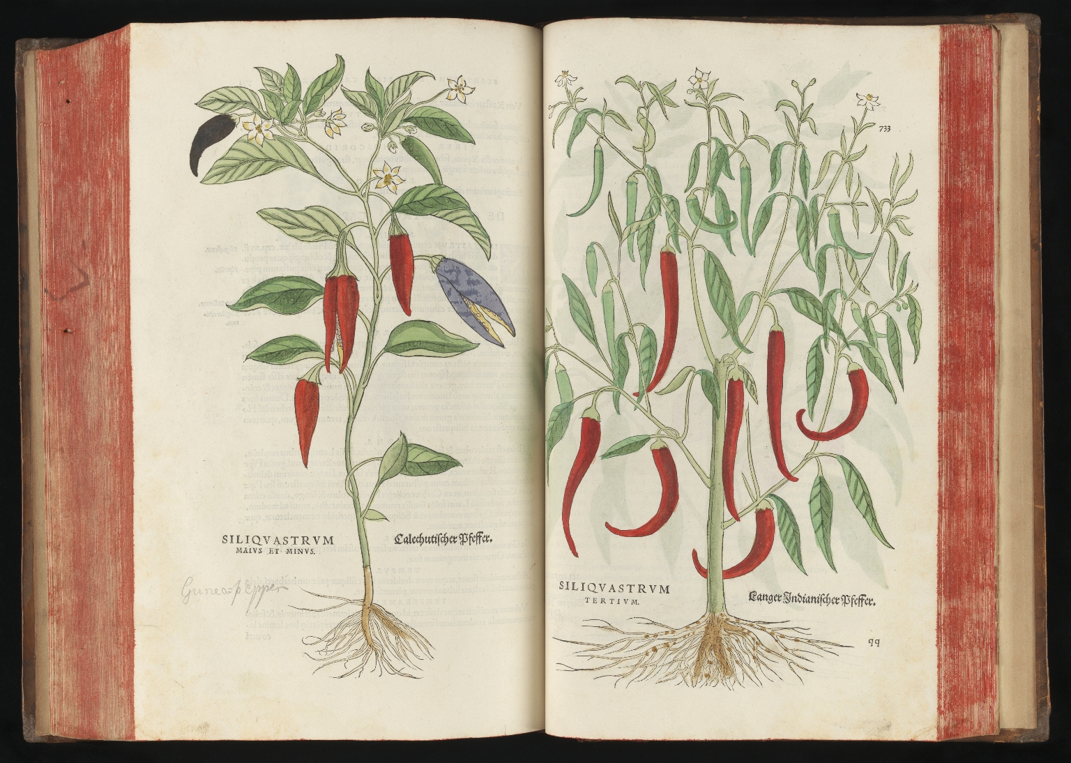 De Historia Stirpium, 1542, pp.732-733